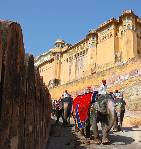 elephants make their way down from Amber Fort