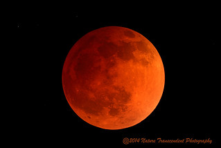 Blood Moon--Lunar Eclipse of April 15, 2014