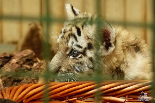 Tierpark Berlin 07.02.2015   184