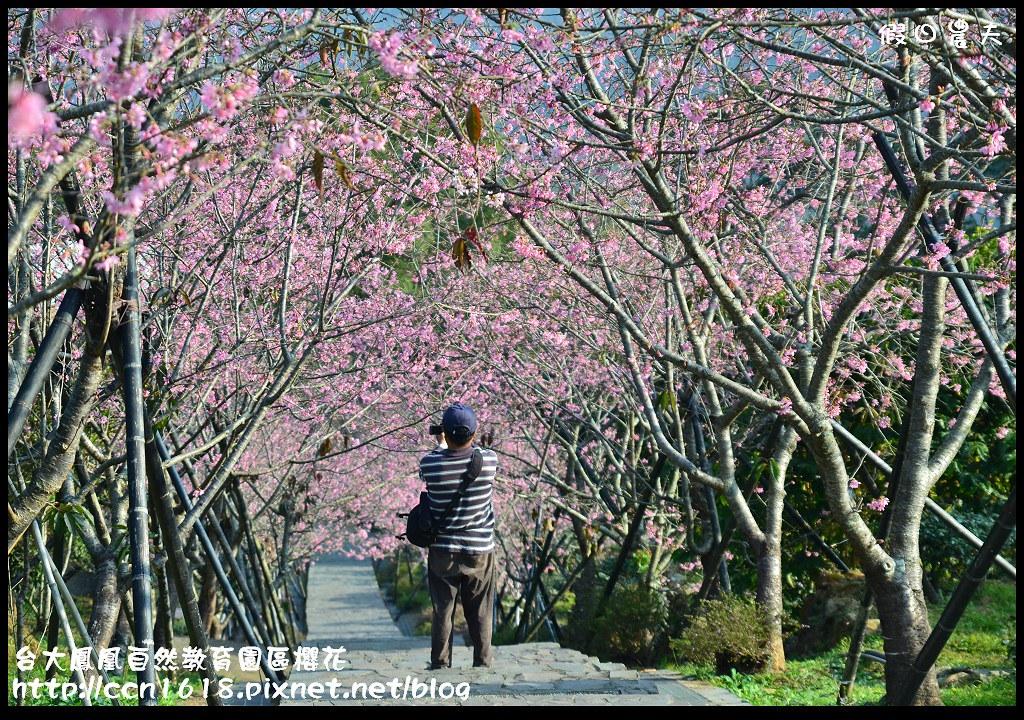 台大鳳凰自然教育園區櫻花DSC_5956