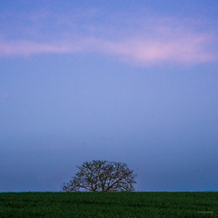 L'arbre - Photo of Branches