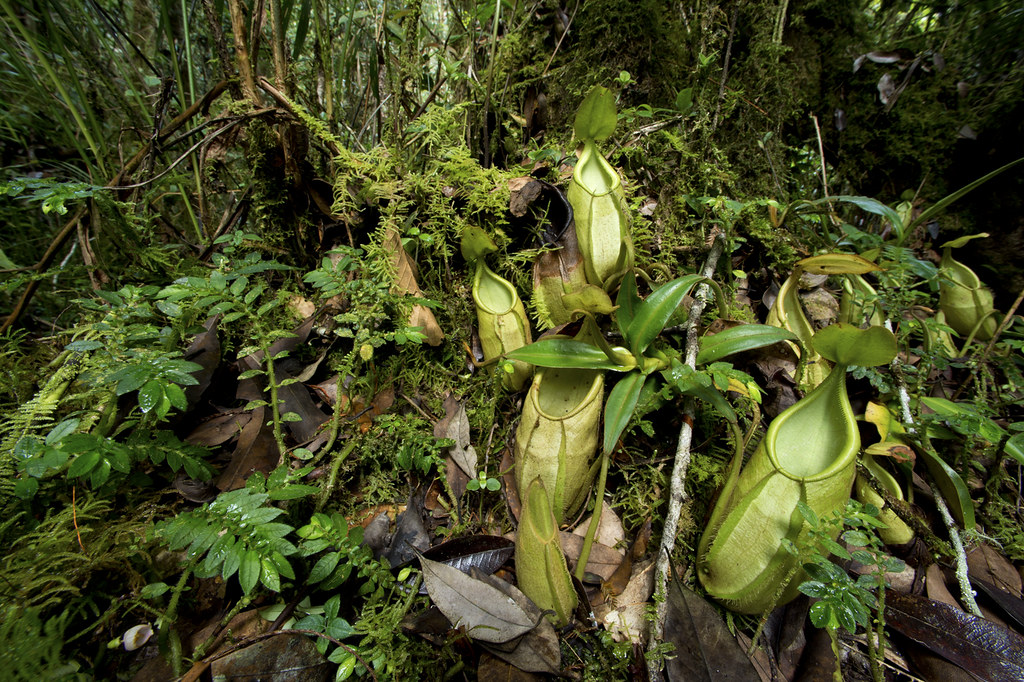 Carnivores et orchidées in situ  16384374982_979542289c_b