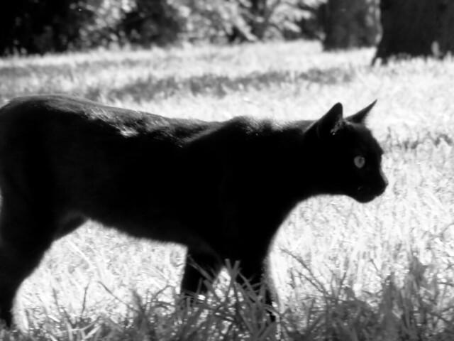 Gato en Parque Retiro, Madrid (2016)