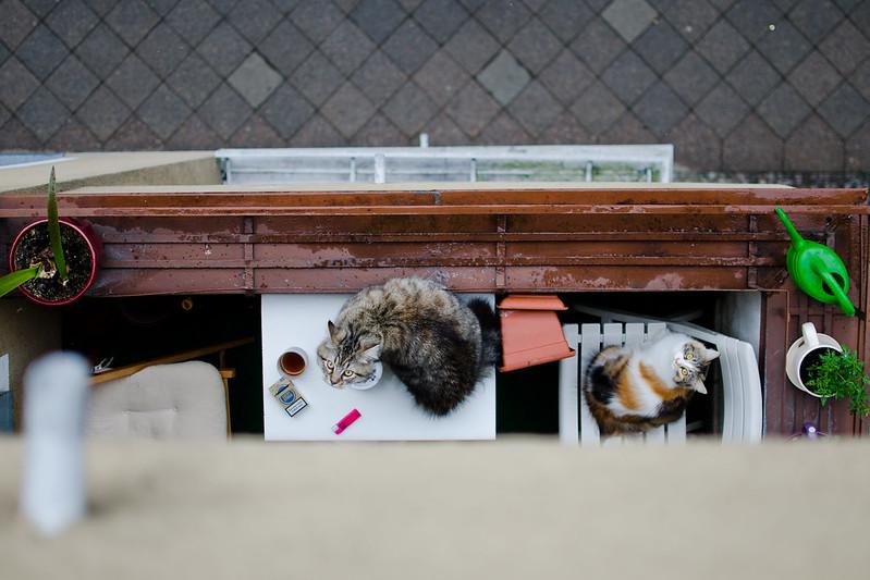 chillerkatzen