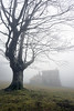 shelter and a tree with fog by Mikel Martínez de Osaba