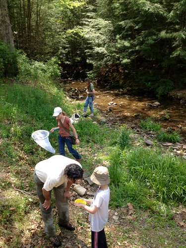 Frost curators sampling stream insects at Sinnemahoning State Park.