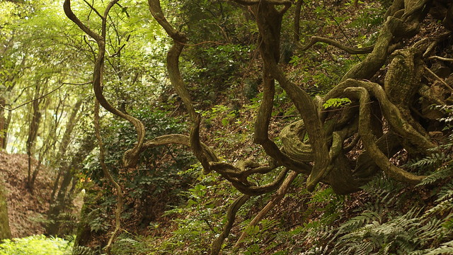 03_tree_7