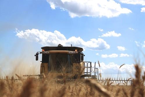 Brandon in the combine.