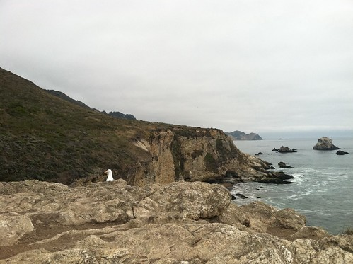 Seagull, Arch Rock, bear valley trail