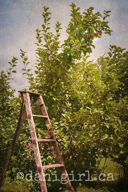 果园里的阶梯
