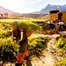 Enroute Phuktal monastery, village Cha, Zanskar, India