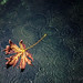 Fall...into Puget Sound by l.gallier