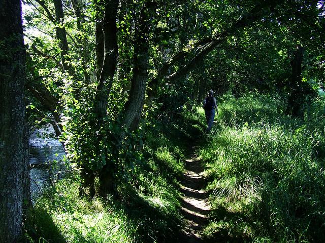 Nethy River path