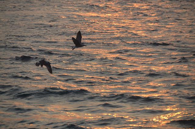 Gaviotas volando sobre el Bósforo en Estambul