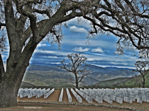 Bakersfield National Cemetery, by George Alger