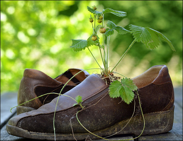 old brown shoes by ohrfeus, on Flickr