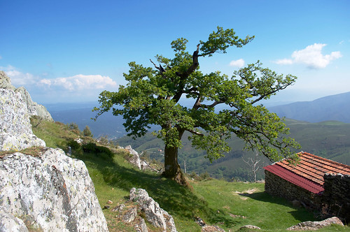 Tree over the mountain