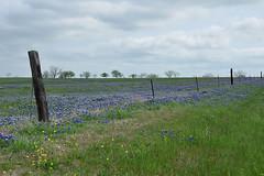 Ennis - Blue Meadow