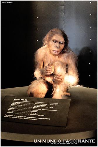 Museo Evolucion Humana, Burgos