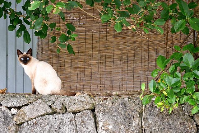 竹富町 黒島 Kuroshima, Taketomi-cho, Okinawa