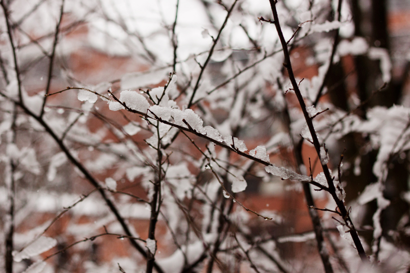 ramas-y-nieve