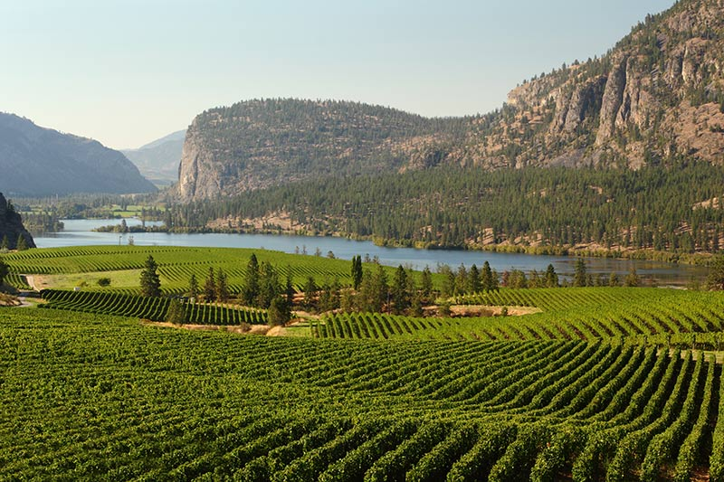 Okanagan Valley Vineyards surround Vaseux Lake and the McIntyre Bluffs, British Columbia, Canada.