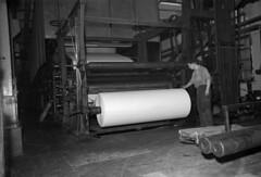 Haarlan paperitehtaan paperikone vuonna 1954. Kuva Mauno Mannelin, Vapriikin kuva-arkisto.