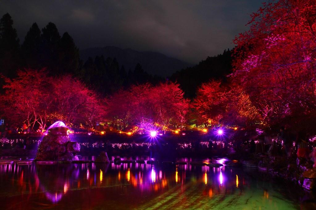 九族櫻花祭 (86)
