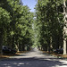Magnolia Lane - Augusta National