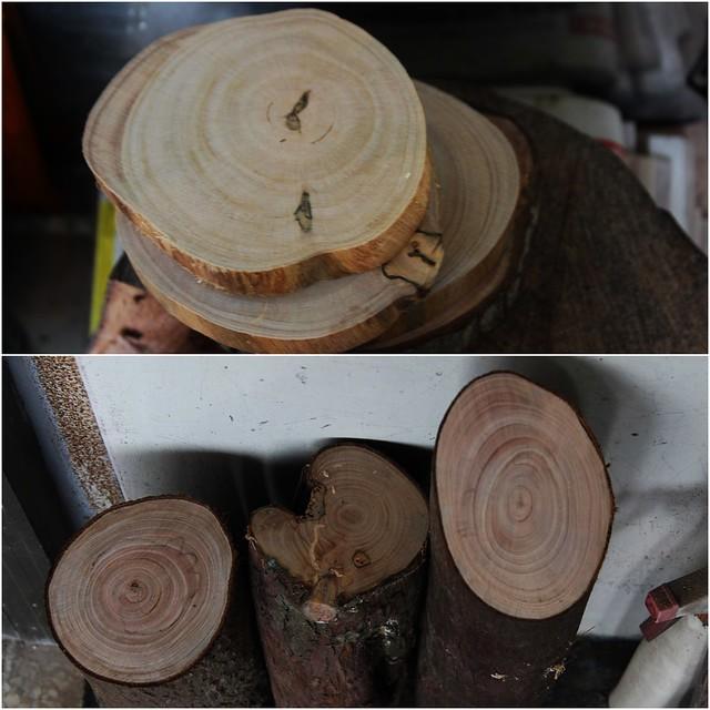疏伐之後的小徑木。攝影:廖靜蕙