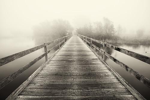 Morning Fog, Yarralumla, Canberra
