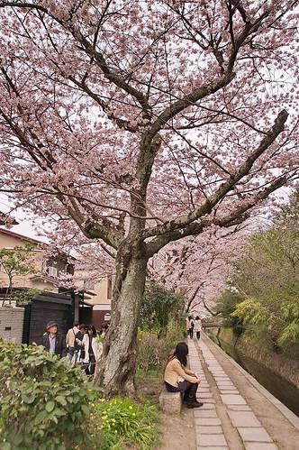 【写真】2013 桜 : 哲学の道/2018-12-24/IMGP9219
