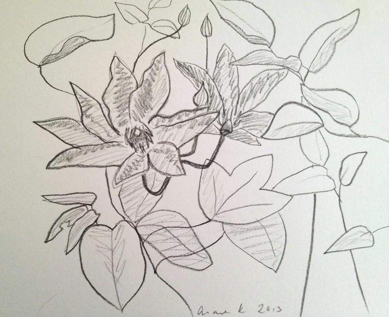 clematis sketch