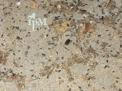 Cockroach Evidence