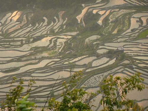 Yunnan13-Yuanyang 24-Bada (50)