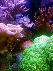 coral reef fish(0.0), coral reef(1.0), coral(1.0), organism(1.0), marine biology(1.0), invertebrate(1.0), stony coral(1.0), marine invertebrates(1.0), aquarium lighting(1.0), natural environment(1.0), underwater(1.0), reef(1.0), sea anemone(1.0),