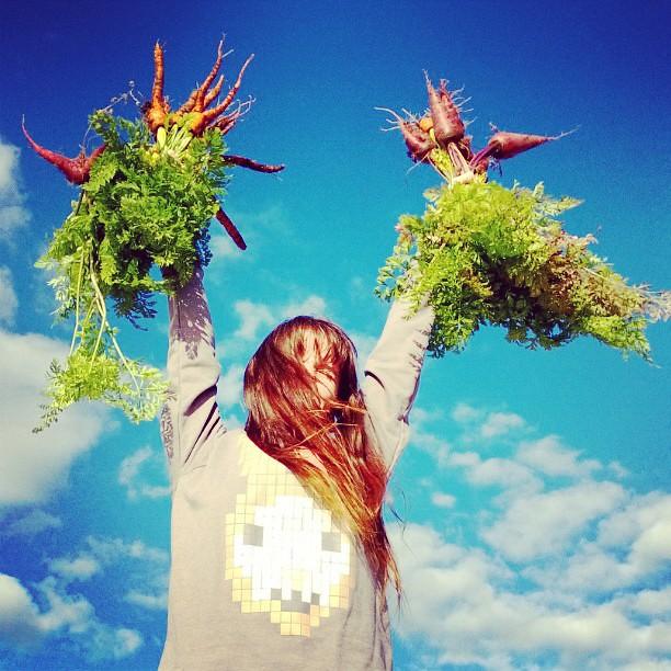 Carrot harvest.  #garden #harvest #boss