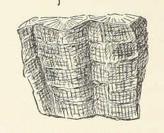 Image taken from page 248 of 'On the Hills. A series of geological tales, etc'