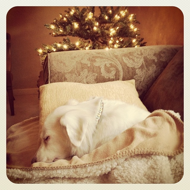 Tree Decorating is exhausting!