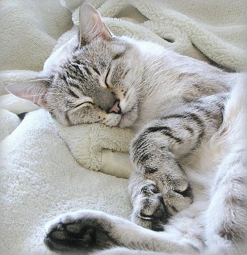 Sweet Sleeping SuzieQ
