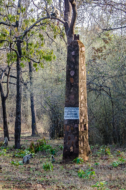 Pillar of Tadoba Tiger Reserve