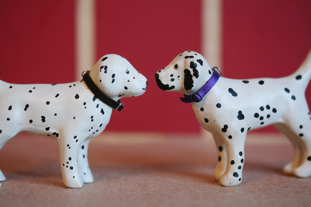Julip Dalmations