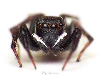 Men .. UF!!! no, Spider In Black (SIB)