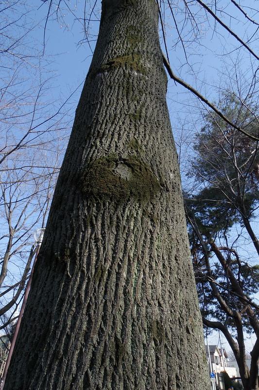 Q7 撮って出し 樹木