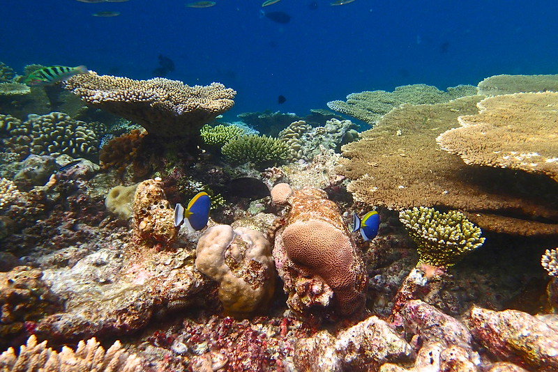 Olympus TG-2 underwater shot in Maldives