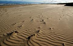 On the beach.Port Stephens NSW.