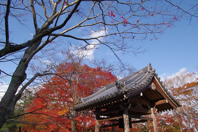 京都‧楓葉