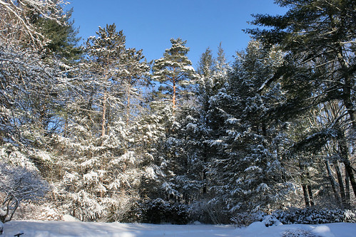 winter scene 119