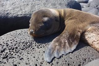 Isla San Cristobal, Galapagos
