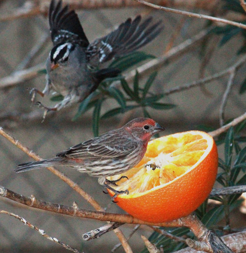 144321-1.jpg by Robert W Gilcrease